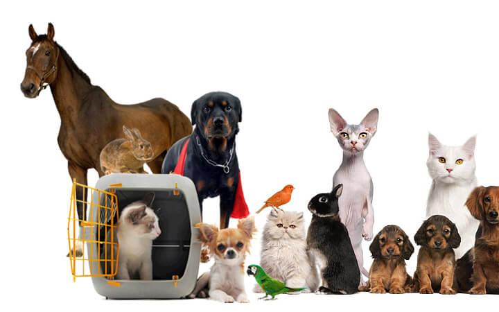 uluslararası canlı hayvan taşımacılığı